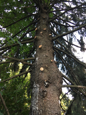 A tree slashed IMG_6061
