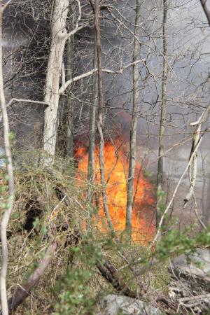 Marshlands Fire 1