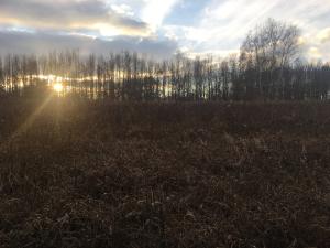 Pic marshlands IMG_3681