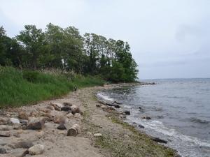 Edith_read_shoreline_062007