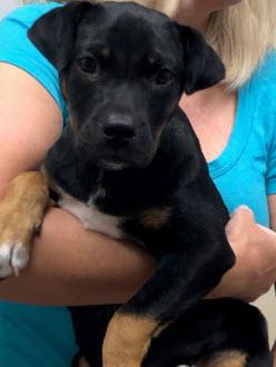 Pet Adoption Cindy