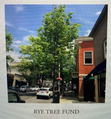 Rye Sustainability Committee Rye Tree Fund