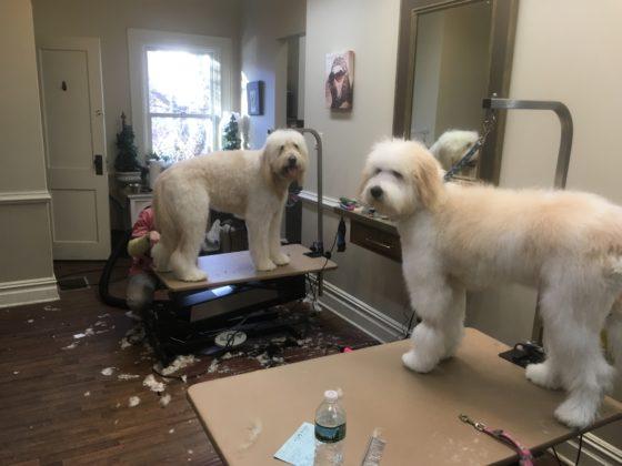 Le Beastro pet grooming Rye, NY