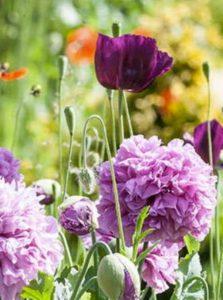 Obituary - purple flowers
