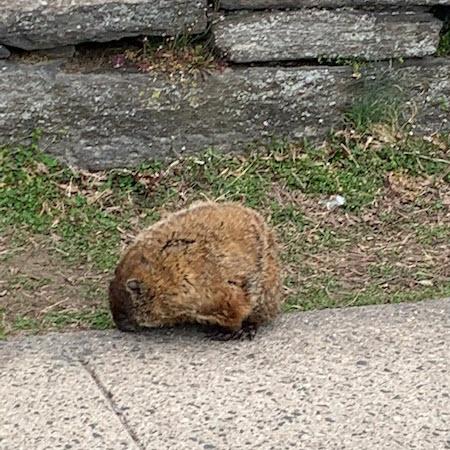 groundhog Rye Middle and High School 03-24-2021