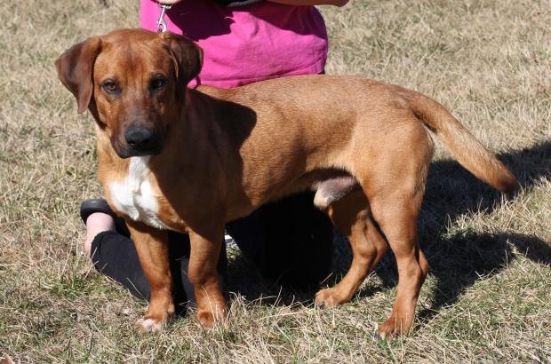 Pet Adoption 2021-07 - Sal the Dog