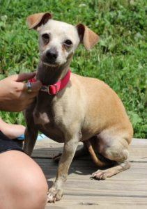 Pet Adoption-09-2021-Holly the Dog