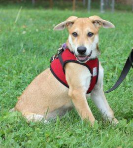 Pet Adoption-09-2021-Jessica the dog