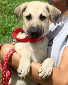 Pet Adoption 2021-07- Angela the Dog
